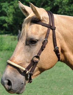 The Side Pull Bridle is a poly browband headstall and braided rawhide noseband. Western Bridles, Western Horse Tack, Horse Bridle, Horse Games, Brown Horse, Headstall, Pretty Horses, Palomino, Westerns