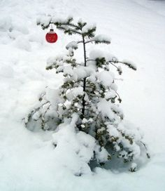 "Charlie Brown's Christmas Tree!! -- ""And suddenly, there was with the Angel, a multitude of the Heavenly Host, praising God, and saying, 'Glory to God in the highest, and on Earth, peace, good will toward men.' ""  And that's what Christmas is all about, Charlie Brown. <3<3<3"