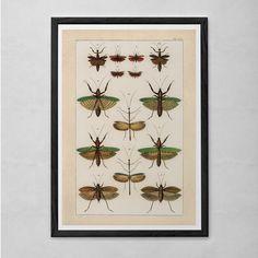 VINTAGE NATURE PRINT- Antique Nature Print - Antique Moth and Butterfly Art Antique Natural History Print Wall Art Butterfly Print