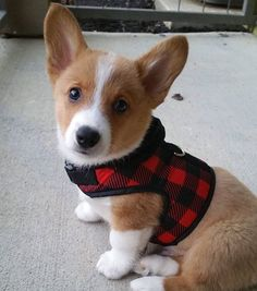16.3k Followers, 1,403 Following, 89 Posts - See Instagram photos and videos from Emergency Corgis (@emergencycorgis)