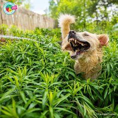 Las fotos animales más chistosas del año: finalistas de los Comedy Pet Photo Awards | SrPerro, la guía para animales urbanos. Photography Awards, Animal Photography, Mannequin Challenge, American Bully, Cat Stevens, Photo Awards, Dogs, Royal Caribbean, Really Funny