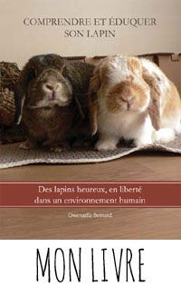 La dure vie du lapin urbain: L'alimentation forcée ou gavage d'un lapin