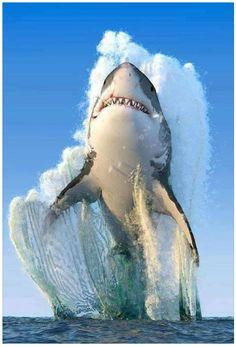 30 Best Καρχαρίες ideas | καρχαρίες, ωκεανός, ψάρια