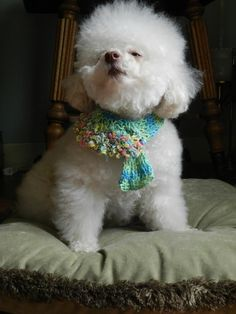 Rainbows and ConfettiNeck Warmer Collar Cover by CanineCoutureLTD
