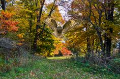 The Owl in the Autumn Forest