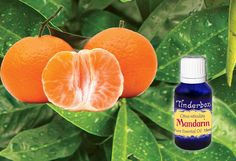 Mandarin Essential Oil (Citrus reticulata) for aromatherapy, skin care and natural perfumes. Tinderbox: supplying pure essential oils since Blue Glass Bottles, Citrus Oil, Ancient China, Pure Essential Oils, Raw Materials, Herbalism, Fragrance, Essentials, Perfume