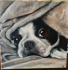 32 ideas dogs art painting boston terriers Source by norachoto The post 32 ideas dogs art painting boston terriers appeared first on SH Dogs. Boston Terrier Kunst, Baby Boston Terriers, Boston Terrier Love, Boston Terrior, Terrier Breeds, Terrier Puppies, Cairn Terriers, Scottish Terriers, Yorkshire Terriers