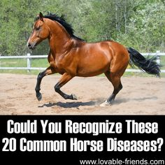 Thought this would be good for all horse owners to know. Try not to have an anxiety attack while reading.