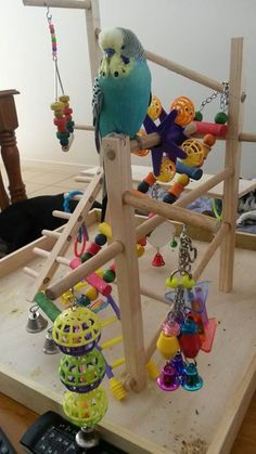 "Please ""Like"" Gizmo Budgie on https://www.facebook.com/gizmobudgie/photos/pb.1453827751525295.-2207520000.1410135675./1477128742528529/?type=3"