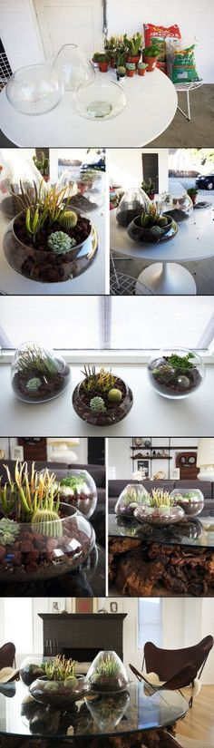 DIY Terrarium ideas. __ What is WUKAR? (See My Profile).