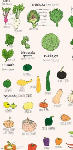Cool Julia Rothman veggie print!