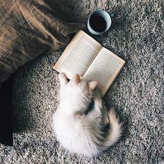 3 of my favorite things...cats, books, tea - ActingLikeAnimals.com