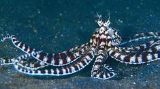 octopus mimmick - Google Search