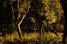 En el parque Városliget, en Budapest, al atardecer.  Escuchando: Into the Sun - Sean Lennon