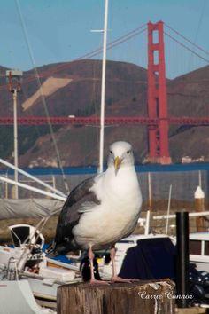 Sausalito, San Francisco, USA