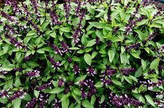 Chop, sprinkle or garnish - our fresh fragrant herbs are the perfect flavour starter or garnish to complete any meal. Live Fresh with Hydro Produce. Fresh Herbs, Plants, Planters, Plant, Planting