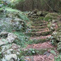 Hiking up Mt. Scenery on Saba Island in the Caribbean