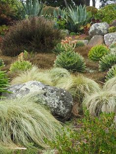 """Aloe polyphylla with carex """"frosted curls"""" and coprosma goundcovers at larnach castle Vegetable Garden, Garden Plants, Garden Ideas Diy Cheap, Sloped Garden, Ornamental Grasses, Drought Tolerant, Season Colors, Shades Of Green"""