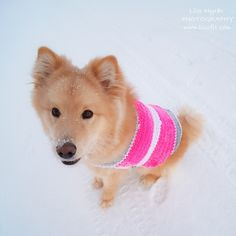 dog vest sweater reflex pink handmade crochet sweet #dog #reflex #vest #reflective #vikingofnorway #garn #yarn #wool #crochet #crochetpattern #handmade #visible #sweater #neon #pink #blacksheep #svartafåret #viking #nordicdesign   #reflexvest #visible #safety