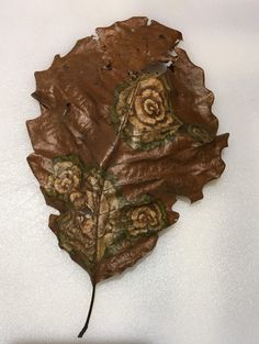 Mother Nature painted flowers on this oak leaf.   fun funny funny pics