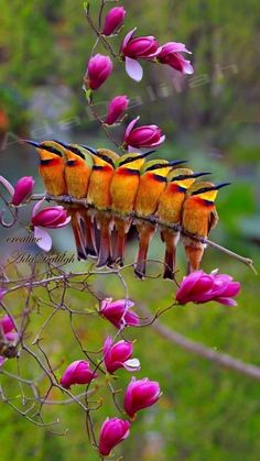 Cute Birds, Pretty Birds, Exotic Birds, Colorful Birds, Beautiful Creatures, Animals Beautiful, Most Beautiful Birds, Kinds Of Birds, Tier Fotos