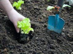 How to grow your own veggies - part Now that your soil is prepared and your garden beds are ready for sowing, you're halfway to being a veg-planting pro. Get some tips. Herb Garden, Garden Beds, Vegetable Garden, Garden Tools, Comment Planter, Grow Your Own, Fruits And Vegetables, Bonsai, Planters