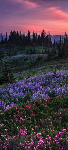 Pastel splendor in the Nisqually Valley of Washington - photo: Bryan Swan on Flickr