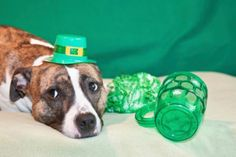 In honor of the greenest day of the year, here are some fun ways to celebrate St. Patrick's Day with your dog in tow. Homemade Dog Food, Dog Eating, Green Day, Some Fun, St Patricks Day, Dog Food Recipes, Your Dog, Pup, Celebrities
