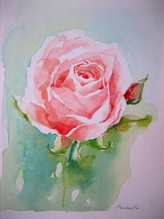 rose watercolor