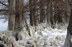 Reelfoot lake, TN - Ice Sculpture   Flickr - Photo Sharing!