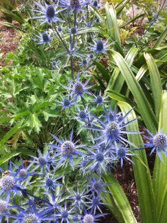 Wonderful! #flowers #snoqualmie http://www.realfx.com/
