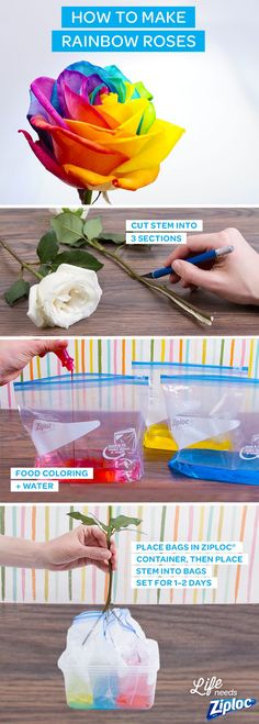 Brighten up your house with these gorgeous rainbow roses. It's simple: just spilt a stem 3 ways (use a knife with parental supervision), then dip into 3 Ziploc®️️ Slider bags filled with different-colored dyes. An inexpensive and DIY way to make mom's day or a great rainy day craft to do with the kids.