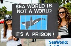 Down With Captivity! Join Marine Activists in Worldwide Protest to Empty the Tanks