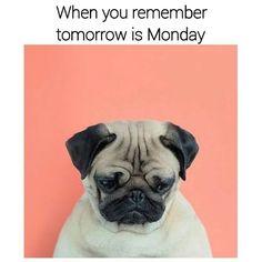 Monday eve