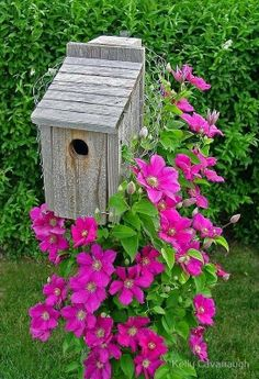 I need to put clematis under my birdhouses