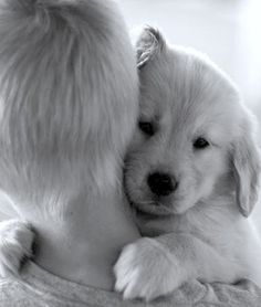 blonde boy and blonde pup...who does that remind me of?!?!?!