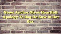News Anchor Gives Heartfelt Apology To Dog He Saw In Hot Car - http://thisissnews.com/news-anchor-gives-heartfelt-apology-to-dog-he-saw-in-hot-car-2/