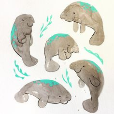 Inky blobby manatees as a warmup for some Serious Drawing (and a refresher on like how painting works) #sketchbook #manatee #manateelove #ink #aquaticmammal #animalsarefriends