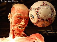 Gunther Von Hagens, Soccer Ball, Inventions, Animals, Animales, Animaux, Soccer, European Football, Animal