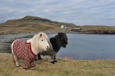 ponies in sweaters by Doreen Brown