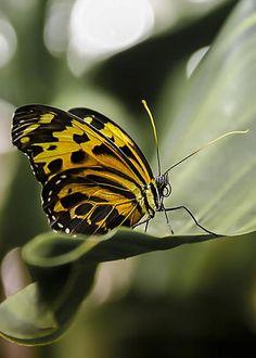 Butterfly Pose by Jimi Albert