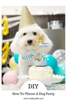 Mattis' Birthday Party – Mad Pup Life DIY - How to throw a dog party! How fun is that! Frozen Dog Treats, Diy Dog Treats, Puppy Birthday Parties, Puppy Party, Doggy Birthday, Happy Birthday, Dog Breeds Little, Animal Birthday, Old Dogs