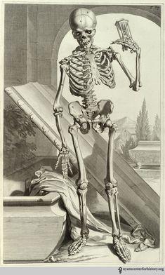 Godefridus Govert Bidloo (1644-1713). Anatomia humani corporis… Amsterdam: J. à Someren, 1685