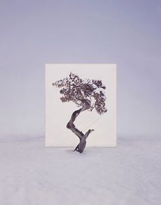 Myoung Ho Lee | Tree Series. | Yellowtrace — Interior Design, Architecture, Art, Photography, Lifestyle & Design Culture Blog.