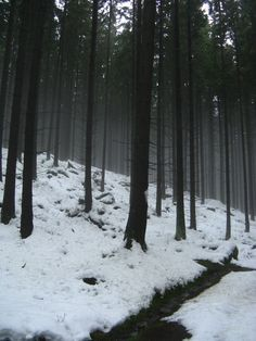 snow - love the stark contrast with the white snow and the black trees Snowy Woods, Snowy Forest, Forest Path, Beautiful Sites, Beautiful Places, Creepy Woods, Silver Bay, Snow Place, Dark Paradise