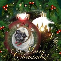 Pug Merry Christmas Ornament Greeting Card