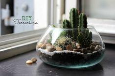 DIY terrarium à cactus et succulentes oh lovely place