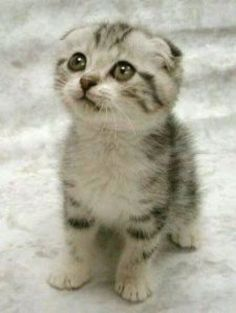 Adorable kitten - the puss n boots look