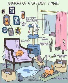 Anatomy of a cat lady;