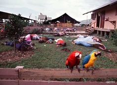 Two macaws perch on a fence in Jonestown, where over 900 members of the People's Temple Cult committed mass suicide.